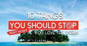 10 Actions You Must Stop Right Now! If You Love The Ocean